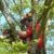 Appleseed Garden & Tree Care
