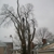 Whole Tree Care by Trapper's Tree Service