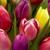Wine & Roses Florist & Gift Shoppe