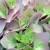 Sinclair Florist & Greenhouse
