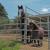 Sea Horse Ranch Barbi Breen-Gurley