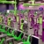 Youfit Health Clubs