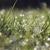 Florida Coastal Irrigation and Landscape