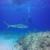 WaterWorld, Scuba,Snorkeling,Swimming and Travel
