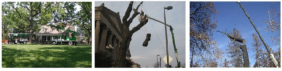 Kansas City Tree Care