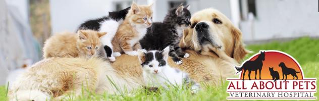 Veterinary Animal Clinic in Chico