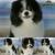 Dog Grooming Shop
