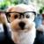 ShamPooch Pet Grooming Salon