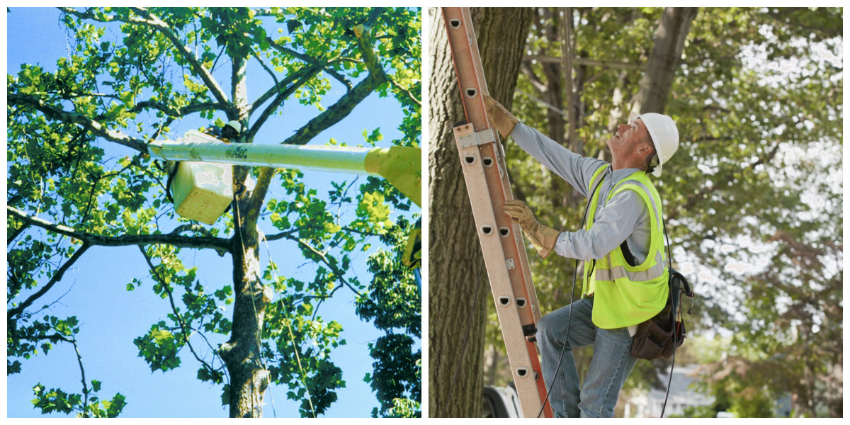 quality tree care service
