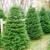 Prepaid Christmas Trees