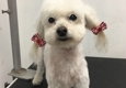 Iron Pet Mobile Grooming & Salon - Hollywood, FL. Poo Free Style