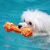 Swimdog Wellness Center