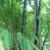 Palm Beach Bamboo