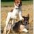 Diamonds In The Ruff Dog Training, LLC