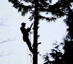 commercial tree removal