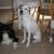 All My Canine Companions