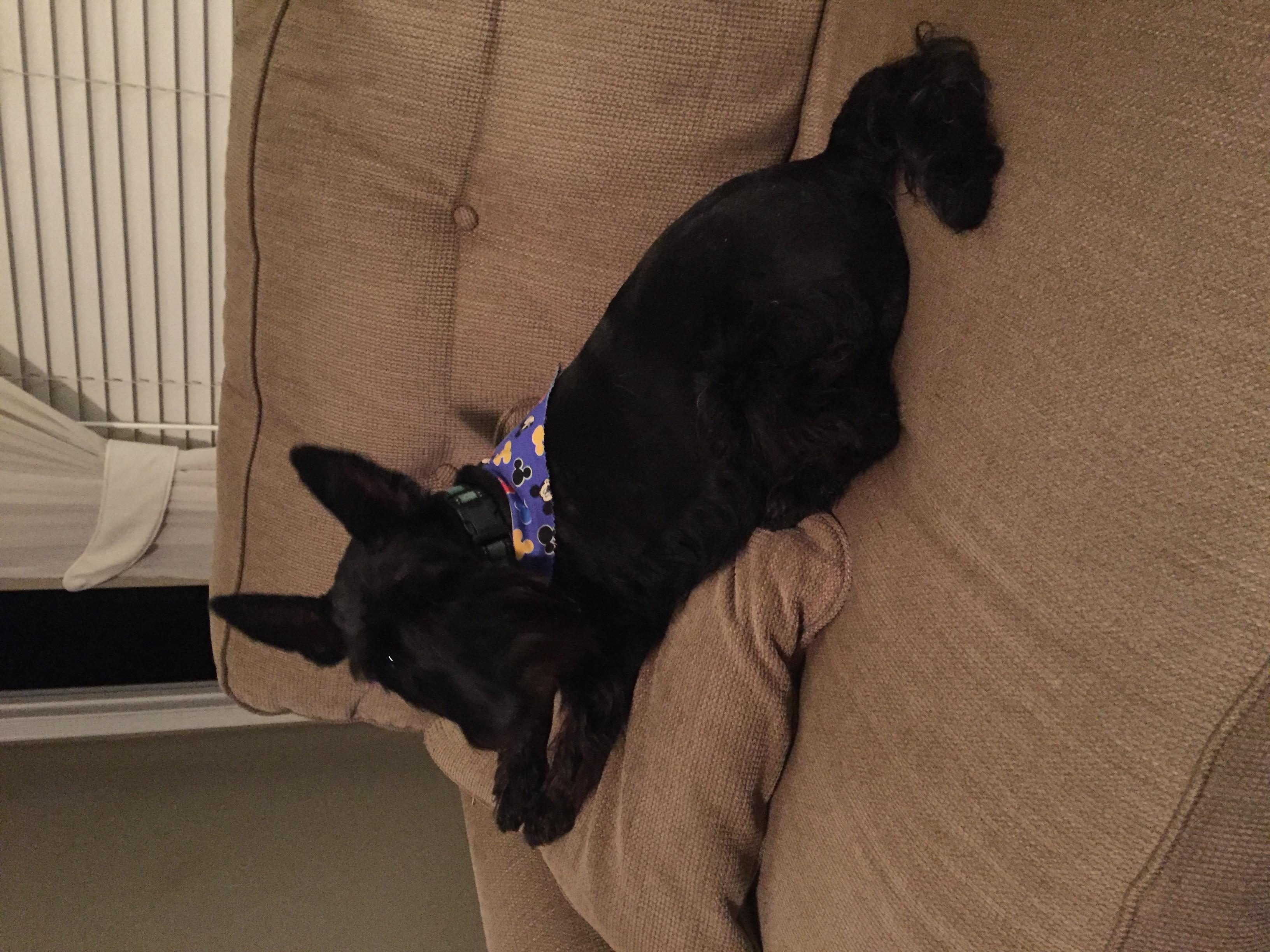 The Puppy Den Daphne Al 36526 Yp Com