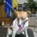 Clendon Brook Pet Care Plus
