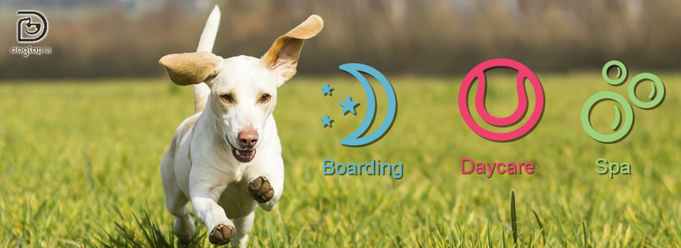 Dog Grooming Highlands Ranch