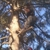 Stillwell's Tree Services