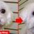 Top Dog Pets & Grooming