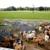 Lonestar Livestock Equipment Company Inc