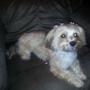 Styl N Companions Pet Spa
