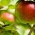 Birch Creek Apples & Honey