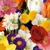 Webbs Of Beckley Florist