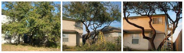 Dream Tree Triming