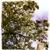 A-1 Wilson Tree & Lawn Service