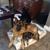ICNDF Dog Training Center