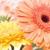 Petals Couture LLC