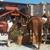 Maysville Saloon