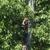 Hayden's tree service