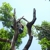 Alabama Georgia Tree Service