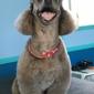 Animal House Grooming - Santa Cruz, CA