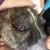Aprils Pet Grooming
