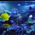 Neptunes Reef