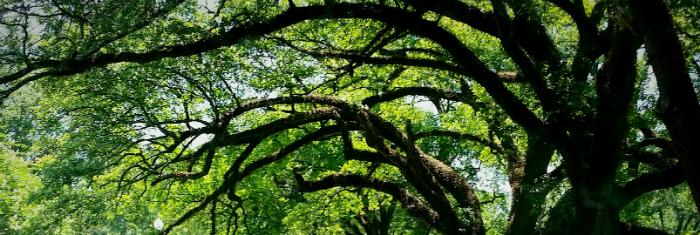 tree care service1