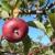 Shelburne Orchards