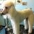 Shearers Pet Grooming Salon
