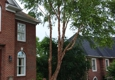 Total Tree Service - Knoxville, TN