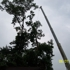 Bills A1 Professional Tree Service