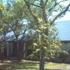 Shenandoah Church Of Christ