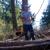 Flawk Tree Service