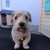 Woofs & Wiggles Dog Daycare & Boarding