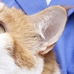 Kernersville Veterinary Hospital PA