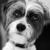Plontzie's Mobile Pet Grooming LLC