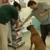 Greenfield Animal Hospital